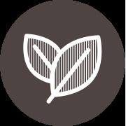 Thé Oolong : Le thé relaxant et brûleur de graisses