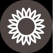 La fleur de tournesol